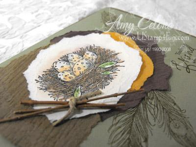 Natures Nest 'detail shot' (click for larger image)